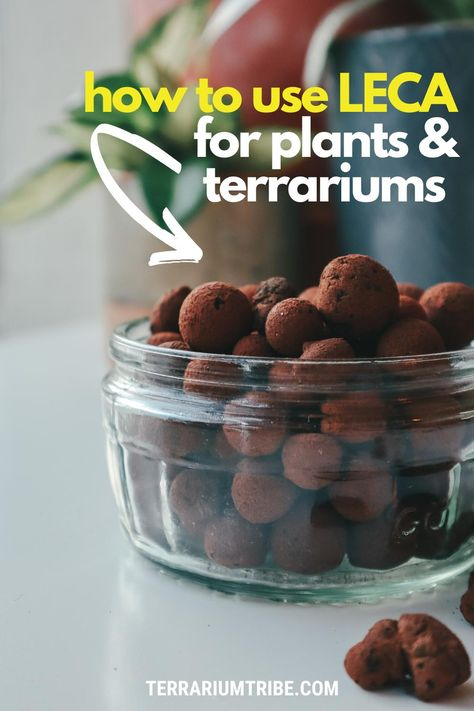 Shade Plants, Water Plants, Green Plants, Potted Plants, Indoor Hydroponic Gardening, Hydroponic Growing, Plant Pests, How To Make Terrariums, Indoor Plant Pots