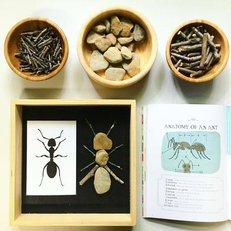 Anatomy of an Ant using our rock & stick loose parts. I kept this very simple & … Anatomy of an Ant using our rock & stick loose parts. I kept this very simple & did not get overly scientific… Continue Reading → Insect Activities, Nature Activities, Montessori Activities, Science Activities, Preschool Activities, Preschool Letters, Preschool Science, Preschool Learning, Teaching