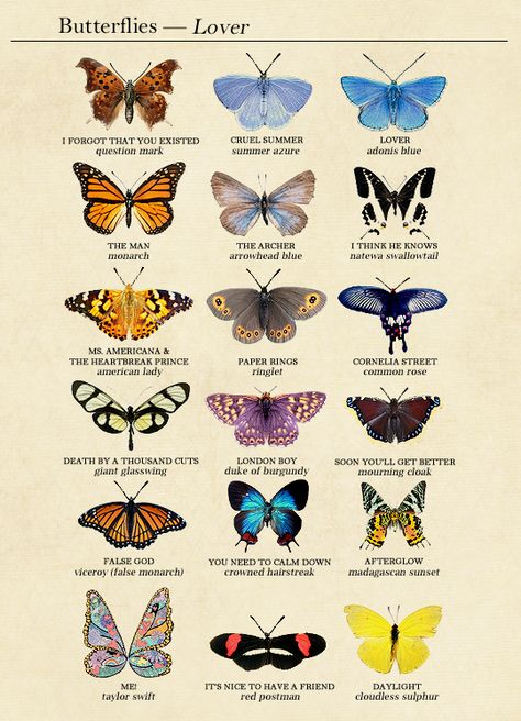 Lover track list as butterflies (based on species names & behaviors) Picture Collage Wall, Photo Wall Collage, Art Collage Wall, Art, Pictures, Collage Art, Vintage Posters, Prints, Aesthetic Art