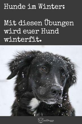 Gratis Winterfit Training Aktive Ubungen Fur Deinen Hund Hunde