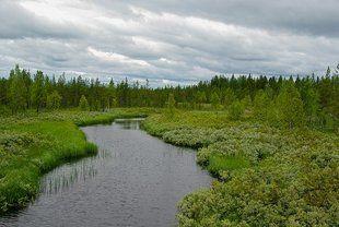 Koszmar W Jakuckim Lesie Opowieść Wędkarza Piekarnik W