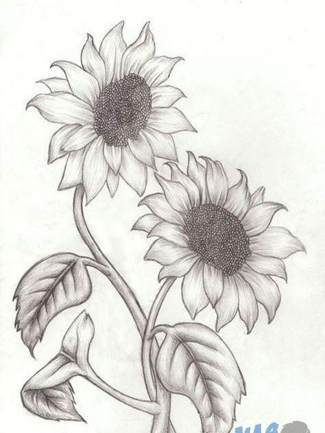 Paling Keren 26 Contoh Gambar Bunga Matahari Yang Gampang 40 Gambar Sketsa Bunga Indah Mawar Matahari Tulip 3 Car Di 2020 Easy Pencil Drawings Sketsa Bunga Matahari