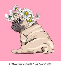 Adorable Beige Puppy Pug In A Chamomile Flowers Wreath On A Pink