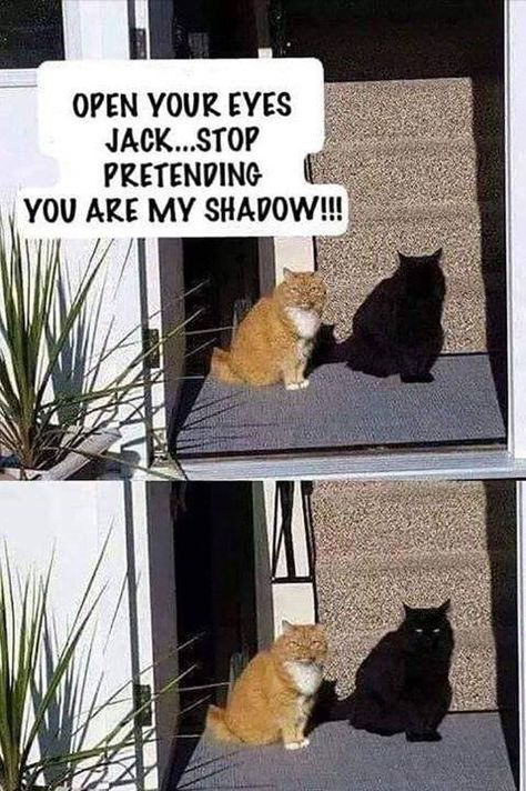 Stop pretending to be my shadow cat - cute animals - # . - Stop pretending to be my shadow cat – cute animals – # Listen - Funny Animal Jokes, Silly Jokes, Funny Dog Memes, Crazy Funny Memes, Really Funny Memes, Funny Animal Videos, Cute Funny Animals, Funny Animal Pictures, Cat Memes