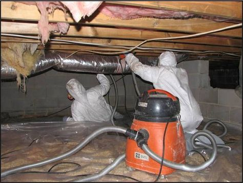 Staten Island NY Mold Removal Mold Remediation Mold Inspection Mold