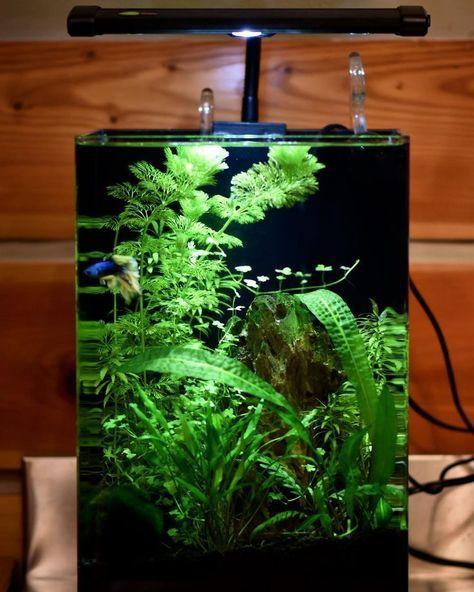 Aquarium Complete Care Guide How To Build Bantam Earth In 2020 Betta Tank Betta Fish Tank Aquarium
