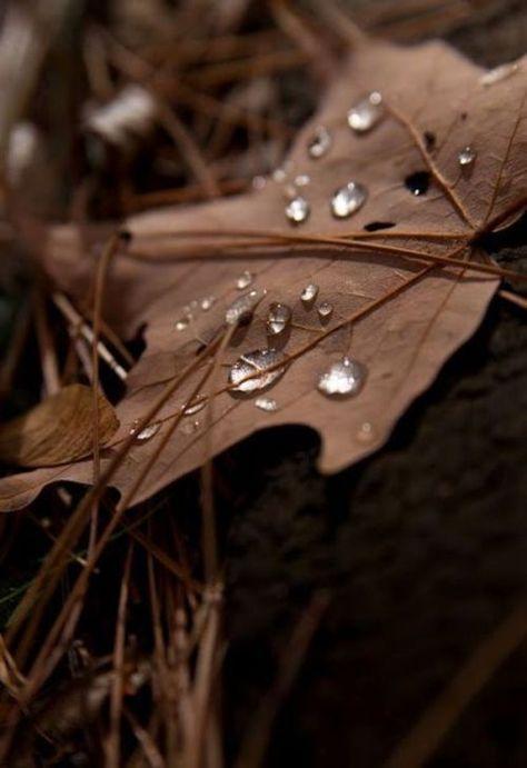 Autumn Leaves, Winter Breeze