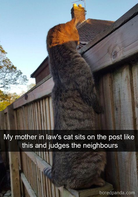 20 Hilarious Cat Snapchats That Will Leave You With The Biggest Smile (New Pics) #catimages