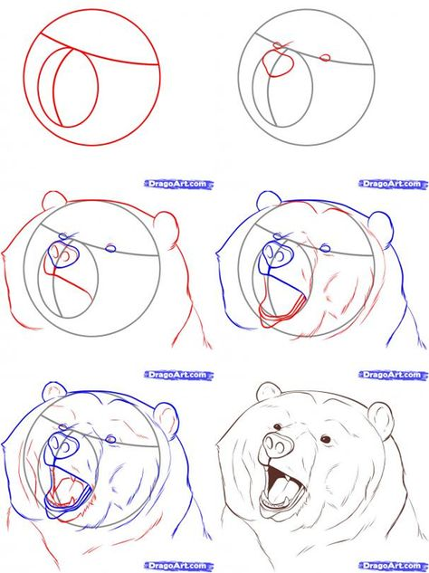 easy to draw bear standig this entry was posted in how to draw realistic