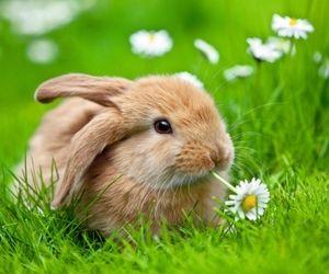 تفسير الارنب في الحلم و رؤية الارانب في المنام Cute Baby Bunnies Animals Bunny Pictures