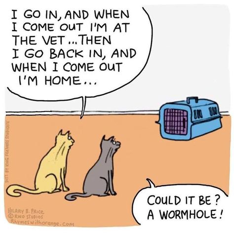 Cat Wormhole - Funny Cat Quotes #funnycat #catquotes #cats