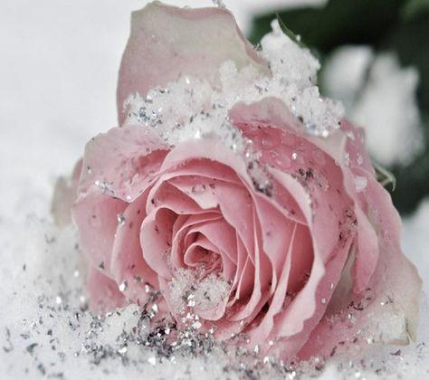 Silver glitter sprinkled on rose