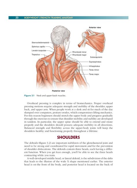Chapter 3 Neck And Shoulders 52 Bodyweight Strength Training