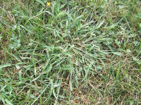 Common Lawn Problems And How To Solve Them Lawn Problems Lawn