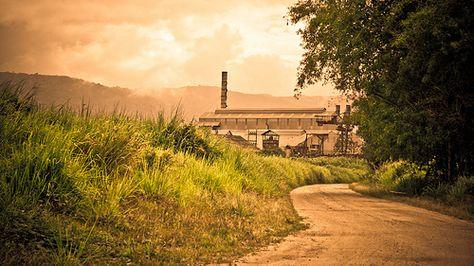 Provista por: Eduardo Veguilla. Sin fecha. Foto romántica de la Central Roig en Yabucoa. Desde el 1887 hasta 1981 operó.