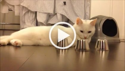 Smart Cat Funny Pet Videos Funny Pets Pictures Funny Animal Videos Amazing Animal Stories Funny Animal Pictures