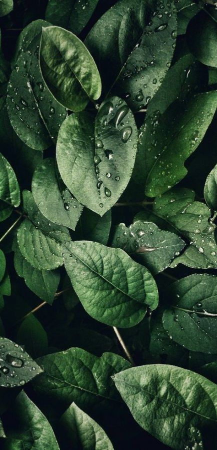 Beauty Wallpaper Green 21 Ideas Aesthetic Nature Plants Green In 2020 Green Wallpaper Plant Wallpaper Backgrounds Phone Wallpapers