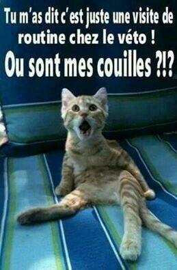 Image Drole 26 Blague Chat Blague Animaux Et Humour