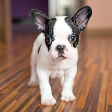 Pin Auf Kleine Hunderassen