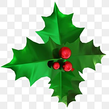 Green Holly Leaves Decoration With Red Berries Holly Leaves Clipart Holly Berries Png Transparent Clipart Image And Psd File For Free Download Christmas Holly Leaf Decor Holly Leaf