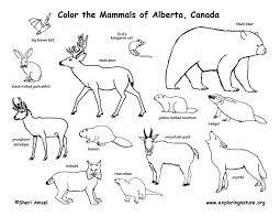 شروحات مكتوبة برامج ومصورة بالفيديو Canadian Animals Mammals