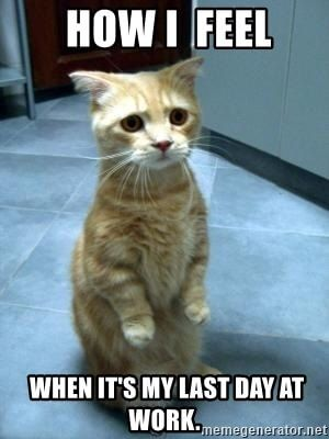 25 Memes To Celebrate Your Last Day At Work Cat Quotes Funny Funny Cat Pictures Cat Pics