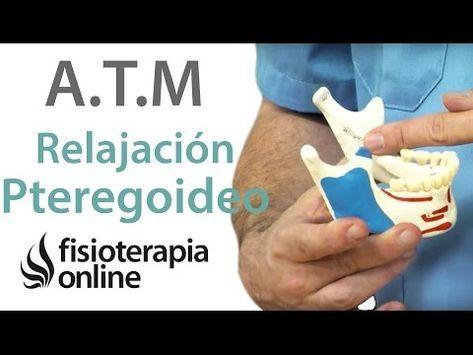 Relajar La Mandíbula Ejercicios Para Los Pterigoideos Youtube Ejercicios Fisioterapia Online Mandibula