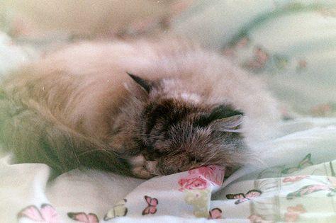 {dreaming kitty} by Sofi Anne