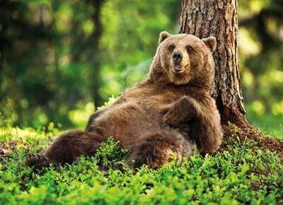"wildlife-beauty-scoubidou-ouah: ""spanielopolis-love """
