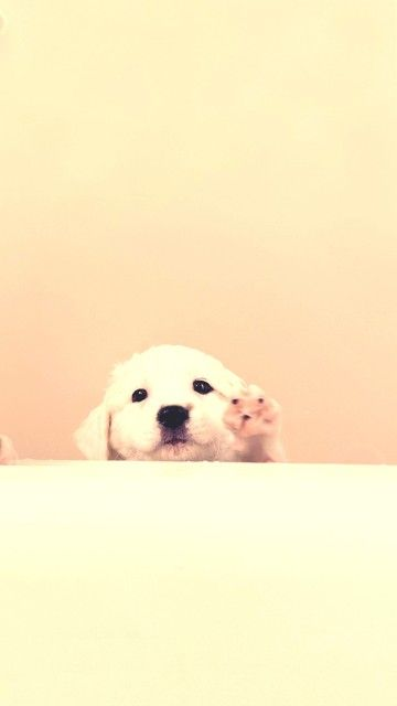 White Puppy Help Me Android Wallpaper 360x640 Cute Dog Wallpaper Puppy Help White Puppies