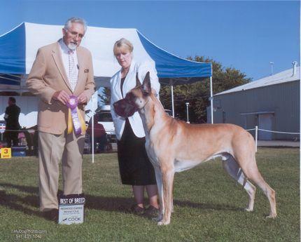 Great Dane Stud Dogs Kc Danes National Treasure C Dogs Animal