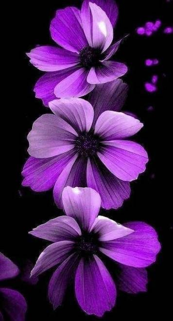 Wallpaper Iphone Purple Flowers Beautiful 54 Ideas Flowers Wallpaper