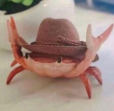 Fabulous Animals Wearing Tiny Hats