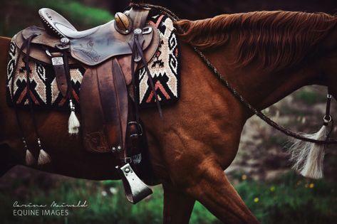 Very beautiful photo horse tack Pretty Horses, Horse Love, Beautiful Horses, Western Horse Tack, Western Riding, Western Saddles, Western Saddle Pads, Hunter Jumper, Barrel Racing Tack