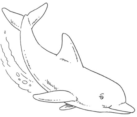 dolphin coloring pages to print   dolphin middot