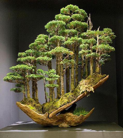 470 Ideas De Arboles Increibles Arboles árboles Extraños Paisajes