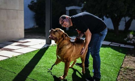 Back On All Fours Ronda The Dog S Pioneering Prosthetic Surgery Tabby Cat Names Dog Waiting French Mastiff