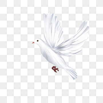 Flying White Dove Free Png Transparent Layer Material Flying Dove Pigeon Stick Figure Pictures Dove Logo Png Transparent Clipart Image And Psd File For Free White Doves Stick Figures Clipart Images