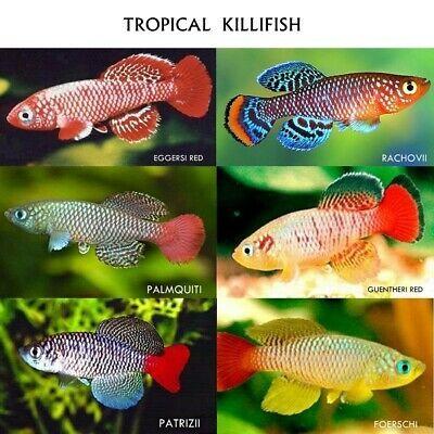 Pin On Killifish