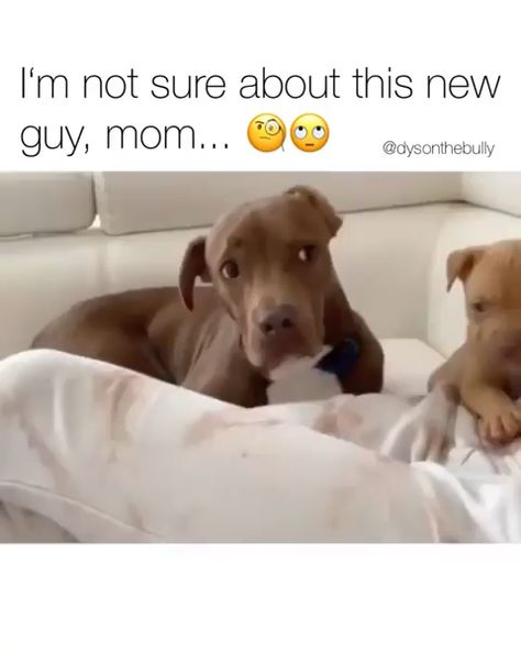 How would your doggo react ?  😊
