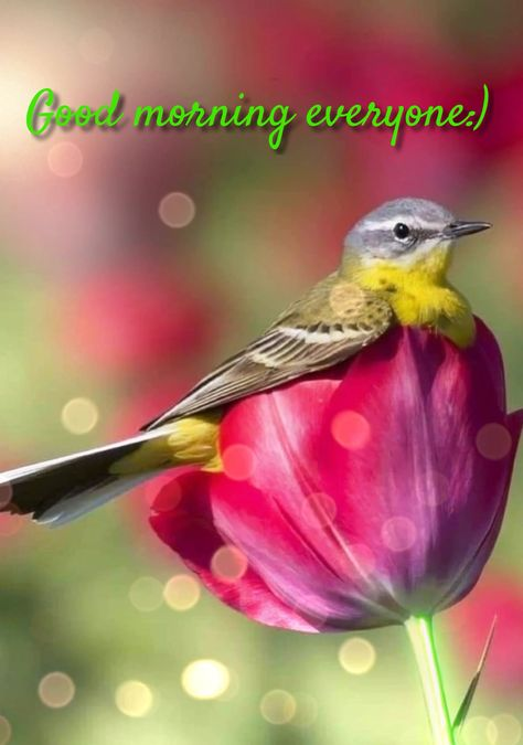 Good morning everyone:)🐦💚