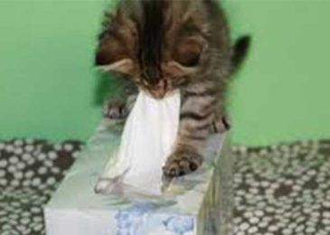 My Cat Keeps Sneezing Causes And Remedy Cat Allergies Pet Allergies Cat Sneezing Remedies
