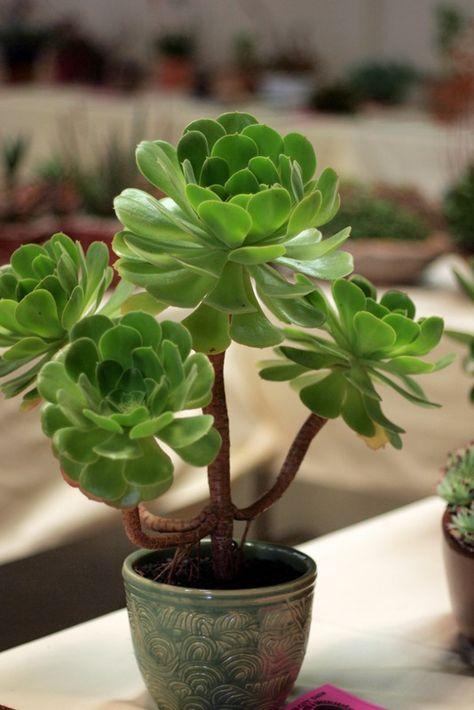Paradis Express A Growing Obsession Cactus Et Plantes Succulentes