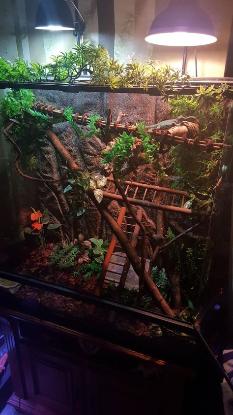 The Best Iguana Cages are Easy to Make - meowlogy Reptile Habitat, Reptile House, Reptile Room, Reptile Cage, Hamster Habitat, Chameleon Enclosure, Snake Enclosure, Chameleon Pet, Gecko Cage