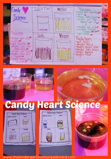 Candy heart science! What happens to candy hearts in various liquids?