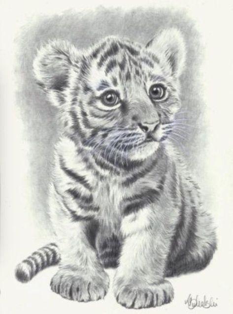 Zeichnung Felin Tierzeichnung Bleistiftzeichnungen Zeichnungen