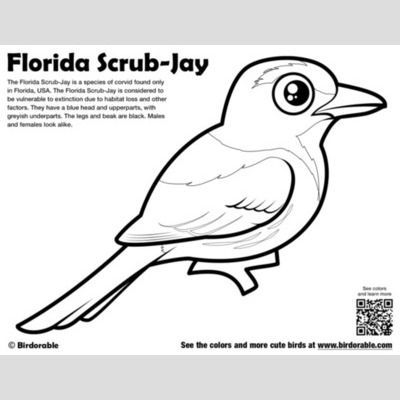 Cute Bird Coloring Pages Page 2 By Birdorable Free Downloads