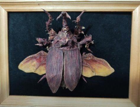 beetle model by i am