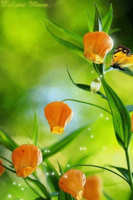 Цветы1 (с изображениями) | Цветочные картины, Красочные ...