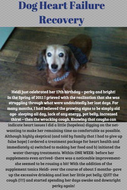 Dog Heart Failure Recovery Heart Failure Heart Failure Symptoms Congestive Heart Failure